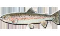 Herman Brothers Lake And Land Management Fish Stocking